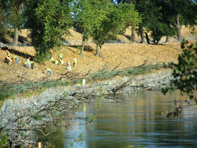 Dead trees can be seen tied down to the tow of the levee at Moon Bend Road in Colusa County.